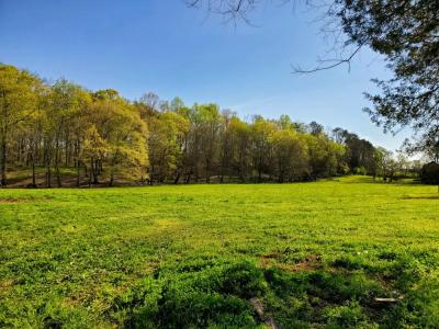 Tract #7 has 5.19 gorgeous acres zoned C-2 Sevier Co. this is the largest tract we have, approx. 3/4 is level, lush green grass with the back covered in cozy hardwood forest with huge, stately trees. several great building sites to choose from. you won't