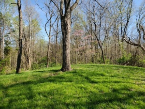 Lot 7 has 22.38 AC our largest tract, most is covered with gorgeous hardwoods with many of the trees measuring 2ft or more in diameter. Some beautiful ridge top grassy areas where deer and turkey roam. This is a nice tract to walk or use a 4 wheeler to th
