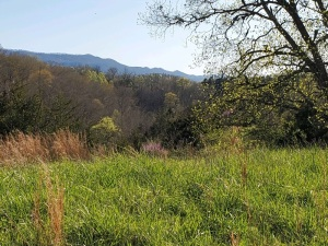 Lot 8 has 18.47 AC. This nice large tract has some small grassy areas, some large trees. Most of lot 8 was cleared and farmed in the past and has small trees ideal for wildlife. Many nice building sites to choose from. Note a 60ft wide part of this tract