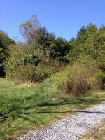 Sale 7: Lot 1 Runaway Hills Ph 2, 8.46 ac wooded lot off private road, short drive to Sevierville