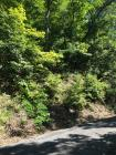 LOT 16 ON SUNSET RD IN SHAGBARK S/D STEEP UP FROM ROAD.